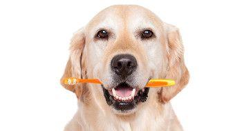 Ansprechpartner Hundefriseur