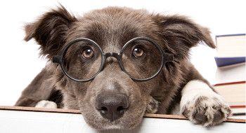 Ausbildung-Hundefriseur