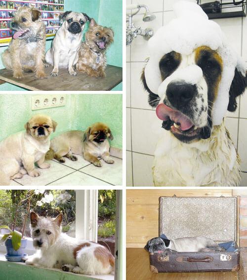 Hunde im Hundesalon