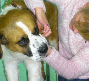 Lehrgang zur Fachkraft fuer Tiergesundheit und Pflege