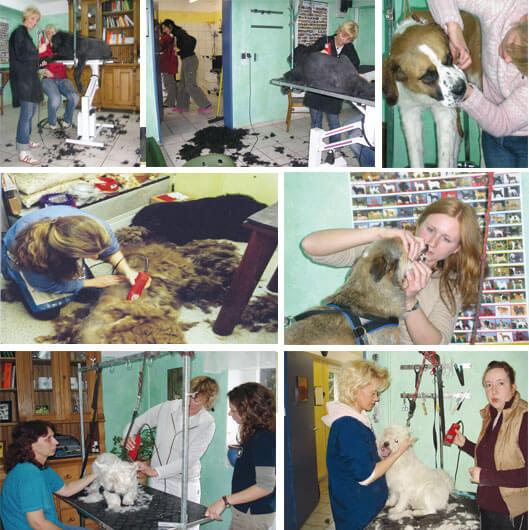 Lehrgang Fachkraft für Hundegesundheit und Pflege - Ausbildung zum Hundefriseur