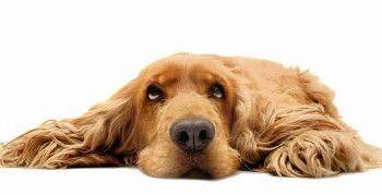 Weiterbildung zum Hundefriseur