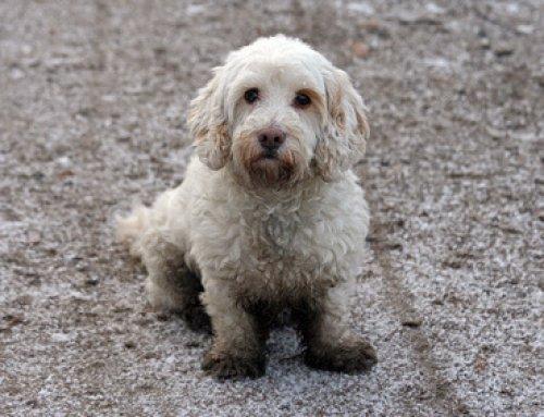Ein Besuch beim Hundefriseur im Herbst und Winter?!
