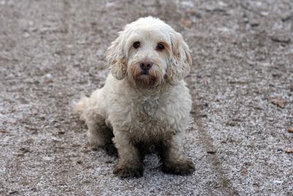 dreckiger-Hund